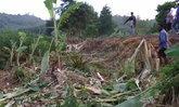 ช้างป่าบุกไร่ชาวอุทัยธานีเสียหายอื้อวอนช่วย