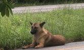 สุนัขหลงยังอยู่ริมถนนจันทบุรีชาวบ้านจ่อขอดูแล