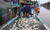 ชาวประมงตราดแห่หาปลาทูหลังคลื่นสงบสร้างรายได้ดี