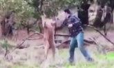 ดังไปเลย! หนุ่มผู้ช่วยชีวิตหมา ปรี่เข้าชกใส่หน้าจิงโจ้