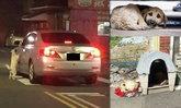 ภาพกัดกินใจ หมาน้อยไล่ตะกายรถ เพราะถูกเอามาทิ้งไว้