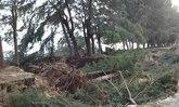 อุทยานฯหว้ากอถูกน้ำป่าซัดถนน-ทิวสนริมหาดพัง