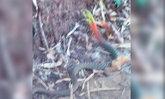 ฮือฮา พบงูคอสามสีถ้ำพระภูบ่อบิด ชาวบ้านเชื่อเป็นงูพญานาค