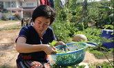 แม่ค้าอาหารพิษณุโลกเป็นหนี้หันปลูกผักเองลดต้นทุน
