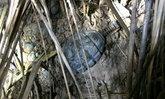 พบระเบิดน้อยหน่าบ่อขยะเก่าหมู่บ้านชายแดน