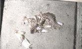 สองผัวเมียผวา กองทัพงูเห่าทำรังใต้ถุนบ้าน พบแล้ว 9 ตัว