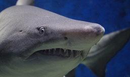 คุณลุงโดดลงน้ำสู้กับฉลาม เพื่อทวงแขนหลานชายคืน