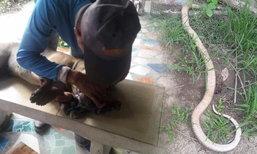หมาโดดสู้งูเห่าปกป้องเจ้าของ น้ำตาไหลก่อนสิ้นใจตาย