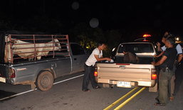 ตำรวจชุมพรรวบ3ผู้ต้องหาขโมยวัวในพื้นที่