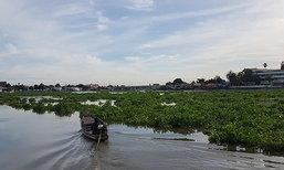 ชาวปทุมฯวอนรัฐกำจัดผักตบในแม่น้ำเจ้าพระยา
