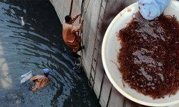 ร่อนหาหนอนแดงกลางน้ำเน่า รายได้ต่อวันกว่า 2 พันบาท