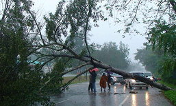ฝนถล่มชุมพรต้นไม้ใหญ่ล้มถนนเอเชีย41หลายจุด