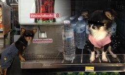 แชร์ภาพหมาเดินช็อปร้านดัง ชาวเน็ตหนุนให้เรียกค่าเสียหาย