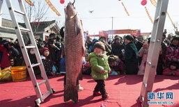 ใหญ่จริง! ประมูลปลาตัวใหญ่กว่าเด็กในเทศกาลจับปลาฤดูหนาวที่จีน