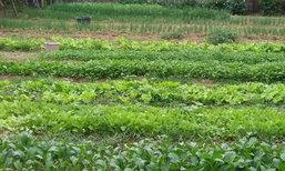 หนองคายปลูกพืชไร้สารพิษ-กินแลกแจกขาย