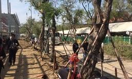 ย้ายต้นมะขาม14ต้นเตรียมพื้นที่สร้างพระเมรุ