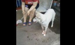 กู้ภัยสุโขทัยช่วยสุนัขจรจัดถูกคนใจร้ายฟันหน้า