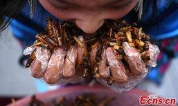 แข่งกินแมลงได้ทอง หนุ่มสวาปามลงท้อง 5 นาที 1.23 กิโล