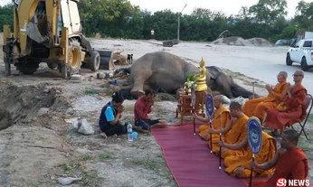 """เศร้า """"พังสำรวย"""" ช้างตกใจเสียงพลุจนป่วยล้มแล้ว ชาวเน็ตลุ้นทั้งคืน"""