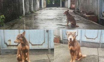 """ไฮโซสาวออกรับ """"เจ้าเฮง"""" สุนัขกตัญญูที่ตากแดด ตากฝนรอเจ้าของร่วมเดือน"""