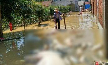 สลด น้ำท่วมที่จีนทำหมูกว่า 800 ตัวตาย ลอยอืดในน้ำ