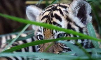 นักอนุรักษ์แคนนาดาเผย Tag ที่ใช้ติดตามสัตว์ป่า ถูกแฮคโดยนักล่า   และช่างภาพ