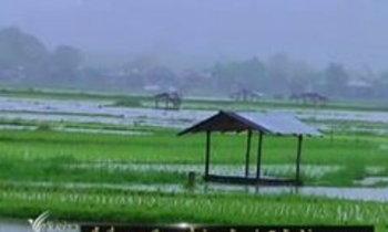 พื้นที่การเกษตรน้ำท่วมเสียหายแล้วกว่า 5 ล้านไร่