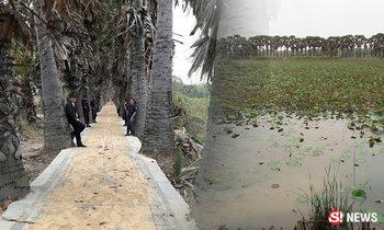 อุโมงค์ต้นตาล 500 ต้น ริมสระน้ำโบราณโคราช ผู้คนแห่เซลฟี่