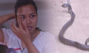 อุทาหรณ์! งูเห่าขนาดใหญ่เลื้อยพ่นพิษใส่ตาเจ้าของบ้าน หลังเปิดประตูทิ้งไว้