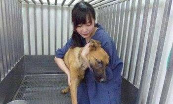 สัตวแพทย์สาวฆ่าตัวเอง หลังถูกตราหน้า จำใจต้องกำจัดหมาจรจัด