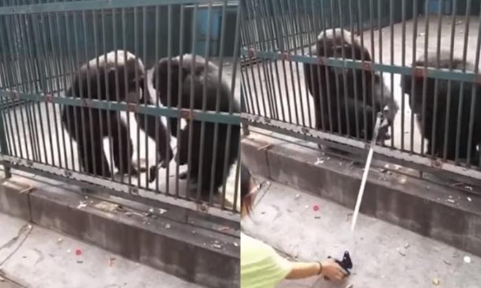 เผยคลิปชิมแปนซีนิสัยดี หยุดเพื่อนแกล้งมนุษย์ พร้อมส่งไม้เซลฟี่คืน