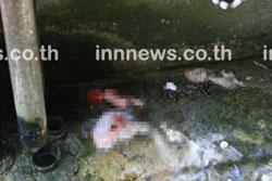 พบศพทารกถูกแม่ทำแท้งทิ้งท่อระบายน้ำ