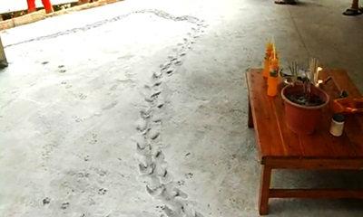 ฮือฮา! รอยพญานาคบนพื้นปูน รอยฝังลึกยาวกว่า 4 ม.