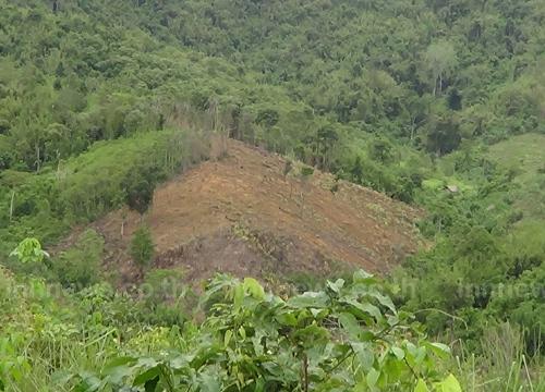 รุกป่าสงวนแห่งชาติป่าแม่สินกว่า 100 ไร่