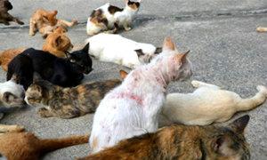 """ผวาแมวตายหมู่ 30 ตัว สธ.คาดป่วย """"ไข้หวัดแมว"""""""