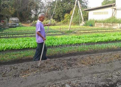 ชาวสวนหนองคายเฮฝนตกช่วยแปลงผักชุ่มชื้น