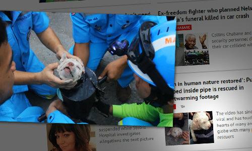 ชาวโลกยกย่องกู้ภัยไทย คลิปดังช่วยน้องหมาติดท่อเหล็ก