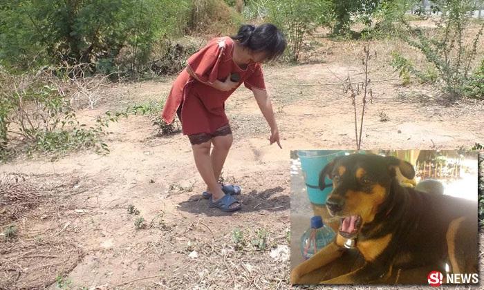 สุนัขถูกฆ่าโหด เจ้าของผวาคาดข่มขู่คดีลูกชาย