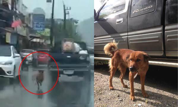 คนพื้นที่เผย ที่มาของภาพหมาวิ่งตามรถจนถูกรุมประนาม