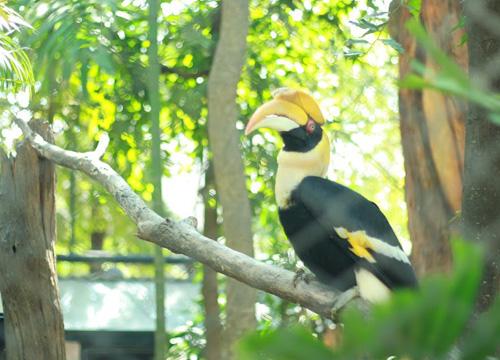 สวนสัตว์โคราชจัดกิจกรรมวันรักนกเงือก